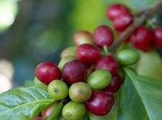 Кафето и неприятният дъх на устата
